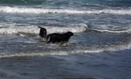 Pet Friendly Beach Morro Bay, CA